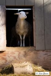 Did you knock on my door?