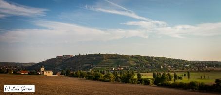 Vineyards in East Germany