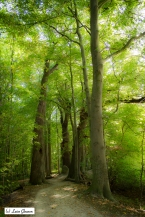 Forest in North Germany