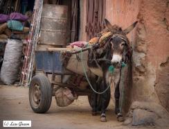 Donkey In Marrakesh