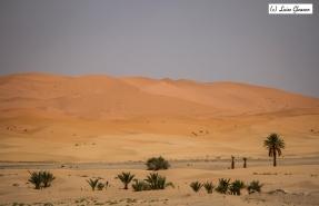 Dunes In Merzouga