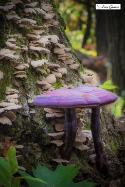 Purple Brothers