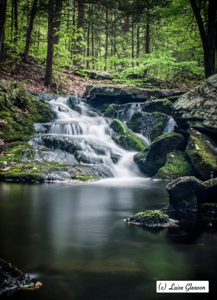 State Forest In Connecticut