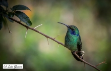 The Land Of Hummingbirds
